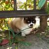 ◆没頭するネコ