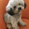 愛犬のカットで日系サロンのPettinaへ。犬のSPAをやってみた