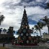 ホノルル市役所のクリスマスツリー