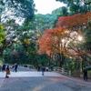 お正月の混雑を避け、12月中に初詣へ。時間差の参拝は良い事いっぱい。明治神宮