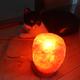 今日の黒猫モモ&白黒猫ナナの動画ー773