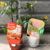 【庭】トマトはじめました。