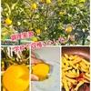 『調理実習 学校で収穫したレモンで&コロナ対応&アレルギー対応』