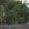 ようやく竹やぶ整備に着手