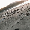 台風の後の砂浜は、面白い「ゴミ」の宝でいっぱいだった。