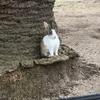 2回目の うさぎ島 瀬戸内海国立公園 「休暇村 大久野島」 朝のお散歩会 で知った事