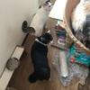 娘と猫たち、憧れの江戸川区の葛西に引っ越していった