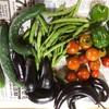【田舎の日常】夏野菜のシーズン到来!今年も夏野菜のビックウェーブに乗り遅れるな!無人販売所作ったぞ!