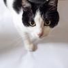 『旅猫リポート』の猫は本物?ナナ(トム)の声やキャスト、ロケ地などまるっとご紹介!