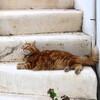 ミコノス島のお猫様たち