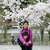 日本旅行2017年4月京都旅行④🚌 金戒光明寺