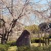 一日一撮 vol.535 桜を求めて満濃池まで