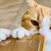 【猫学】愛猫も飼い主も楽しい爪切りタイムの作り方
