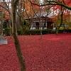 京都・黒谷 - 真如堂で迎える秋の終焉