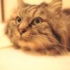 リビアン記録 2月1日  遠く離れた場所で放置された猫、 リビアンをなんとしてでも抱きしめる。その思いだけだった。