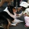 夏休みに兵庫で動物とふれあえる穴場スポットはココ!