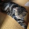 コロナ禍での海外移住⑫:猫のリンパ腫