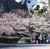 東京駅から一番近い梅の名所 皇居東御苑は散策の穴場