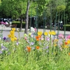 初夏の木場公園とスカイツリーを撮ってみた【清澄白河お散歩日記】