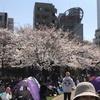錦糸公園 桜まつり 2018年 (6)