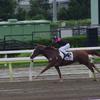 <函館スプリントS 傾向>キャリアの浅い馬が好走する傾向