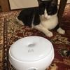 ★915鐘目『愛猫レフくんが大興奮!我が家に「猫じゃらシッター」がやってきたでしょうの巻』【エムPのイケてる大人計画】