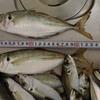サビキ釣りでよく使うぶっこみサビキ