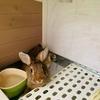 ウサギの暑さ対策にクールアルミボード
