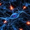 【NHKスペシャル 人体】脳は記憶とひらめきの源!その仕組みと正体とは?