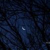 月 枝 星