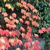 駒沢公園で紅葉狩り