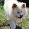 さようなら、わさお!元祖ブサかわ犬は推定年齢13歳で大往生