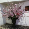 花のディスプレイ 桜のパフェって 勝手に名付けちゃおう (^^♪