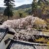 【京都】【御朱印】『十輪寺』に行ってきました。 京都観光 京都旅行 国内旅行 社寺めぐり 京都桜  御朱印集め
