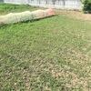 スイカまわりの除草を行いました