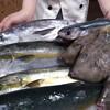 令和元年『初モノ』漁港直送の魚たち到着!