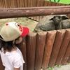 東武動物公園の動物園 草を食べてたライオンが印象的