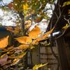 【228】港区白金台 畠山記念館で近代日本の草創期を想う