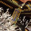 【京都】今が見頃 京都で一番有名な梅の名所、北野天満宮の楽しみ方