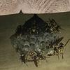 豊橋市でウッドデッキの下の蜂の巣を駆除!のつもりがまさかの襲撃に合うという悲劇が!!