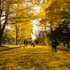 【一日一枚写真】黄金の銀杏並木道 Part.13【一眼レフ】