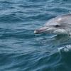 ドルフィンスイムを存分に楽しむために持っていくべき持ち物 【日本国内で野生のイルカと一緒に泳げる場所、御蔵島】