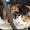 【愛猫日記】毎日アンヌさん#24
