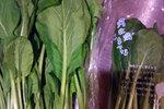昔ながらの小松菜