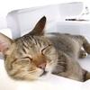 寝付きを良くする飲み物、食べ物で快眠体質を目指してみる