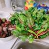 備蓄に最適な野菜と言えば食べる血液ビーツが最強では?