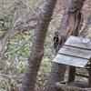【春の道東旅行】養老牛温泉を再訪!湯宿だいいちは文句なしの満足度