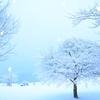 寒い日が増えてきた! 多肉&サボテンの冬越しポイントを再確認しよう!