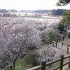 【2018】関東の梅の見ごろと混雑は?おすすめスポット4選