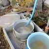 油断した、鉢物が霜害に…。
